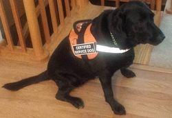 Service Dog Sophie - 2