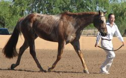 Brenna Lacki and Wayward Willie, owned by Sue Betcher