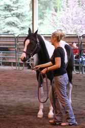 Showmanship Clinic