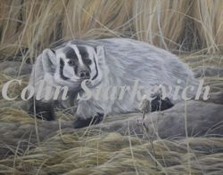 "American Badger (16 by 20"" acrylic on masonite)"