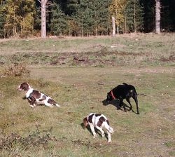 Forest run with Molly and Pippa