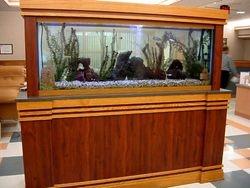 150 gallon Freshwater