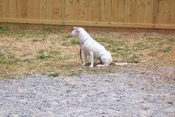 off leash sit stays