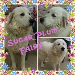 Sugar Plum Fairy--AFTER A FEW MONTHS