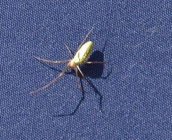 Unusual Spider