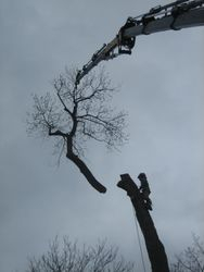 top section tree removal