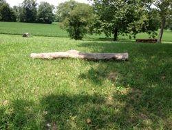 """Small Log 12"""""""