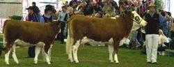 M-D Lilibet A274 & Calf