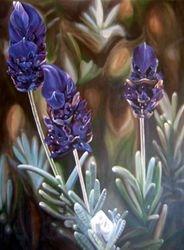 """Lavender"""
