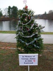 A memorial tree