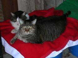 Raplh Waldo and Mr. Gray