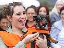 Wiener Dog Race Winner