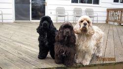 Hamlet, Olivia & Charlie