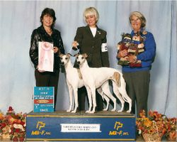 Lily & Lacey - Best in Show Brace