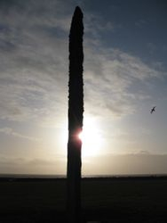 Standing stone and fulmar at sunset