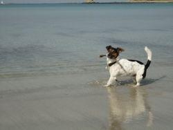 Ferienhaus Bretagne mit Hund 8