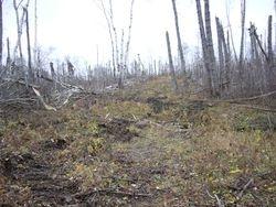 Oct 19 Trail Work