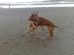 Elvis, and Baako Kinghorn Beach