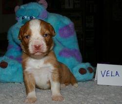 Vela at 17 days
