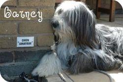 Barney relaxing
