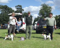 2013 OPEN SHOW - BEST JACK RUSSELL (left) & RESERVE (right).