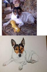 Photo comparison