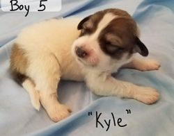 "Boy 5 - ""Kyle"""