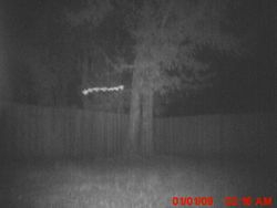 A rod anomaly caught on the stealth camera