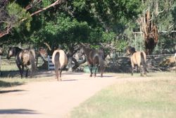The Front Paddock Mob