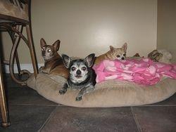 Petey, Angelina, Annabelle