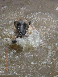 Jolt learning to swim
