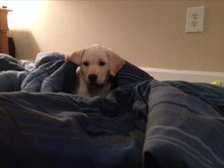 Chloe lounging