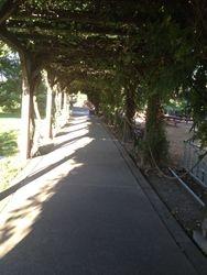 Beautiful walk way