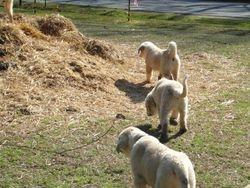 Exploring the manure pile