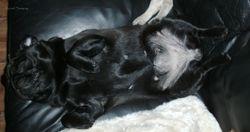 Esmeralda sover på ryggen
