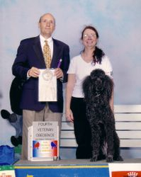 Flash winning Veterans fourth place at PCA National Specialty at age 13.  6/14/05.