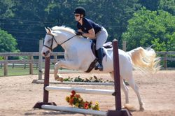 Max @ Silverthorn HJ Show