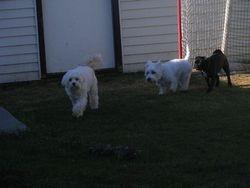 Dexter, Cosmo and Zoe