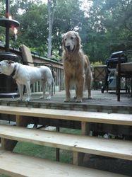 big dog play group