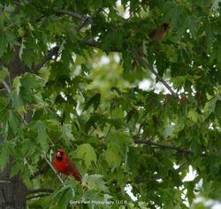 Both Cardinals