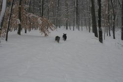 Emma and Zoey running in the snow