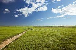 pad in korenveld