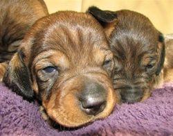 bitch pup 14 days 2
