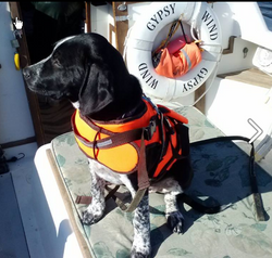Pepper's got her lifejacket