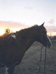 T'pau at sunset