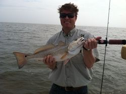 Trinity Redfish on a gold spoon