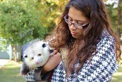 Amanda Volunteer and possum