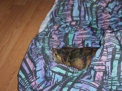 Ziggy/My Turtle resting.
