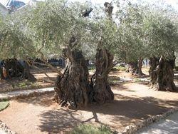 Huerto de Getsemani