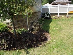 removed weeds